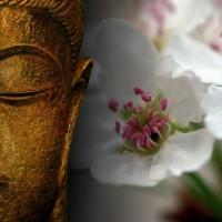 peace-meditation-200x200
