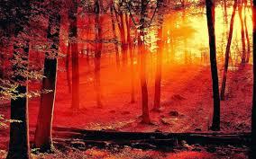 forest wisdom