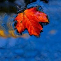 leaf-pics